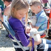 Kevin Pennyfeather Rep Staff A baby goat played with 7-year-old Sarah Siemens' sweater in John's popup petting zoo at the Daystar Church Father's Day Bash on June 18.